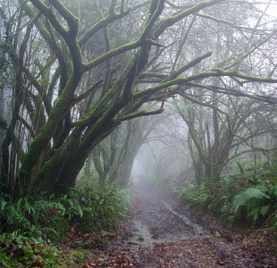 Elven Path by Samantha Creary a.k.a. Jakari